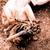 puppy · volwassen · herder · witte · moeder · dier - stockfoto © jarin13