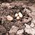 aardappel · oogst · landbouwer · handen - stockfoto © jarin13