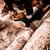 человека · назад · оранжевый · увидела · дерево · лес - Сток-фото © jarin13