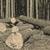 フォークリフト · 爪 · 移動 · 木材 · トラック · マシン - ストックフォト © jarin13