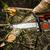 man sawing a log in his back yard stock photo © jarin13