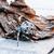 európai · kert · pók · kereszt · fajok · közelkép - stock fotó © jarin13