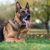 hond · leggen · naar · vloer · home · eigenaar - stockfoto © jasminko