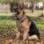 herder · hond · gras · veiligheid · najaar · huisdieren - stockfoto © Jasminko