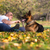 成人 · 男 · 座って · 屋外 · 羊飼い · 犬 - ストックフォト © jasminko