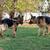iki · köpekler · bir · sopa · çim · hayvan - stok fotoğraf © jasminko
