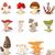 different kinds of mushrooms stock photo © jawa123