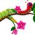 lagarta · desenho · animado · coleção · feliz · olhos · fundo - foto stock © jawa123