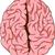 human left and right brain cartoon stock photo © jawa123