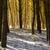 ağaç · gölgeler · kar · kış · gün · orman - stok fotoğraf © jaycriss