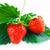 груши · белый · два · вкусный · зеленый · лист · изолированный - Сток-фото © jaycriss