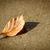 Closeup of orange leaf abandoned on concrete stock photo © jaycriss
