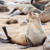 cape fur seal stock photo © jfjacobsz