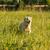 boldog · kutya · golden · retriever · öröm · hamar · fut - stock fotó © jfjacobsz