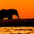 elephant bull silhouette on sidudu island stock photo © jfjacobsz