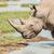 white rhinoceros drinking water stock photo © jfjacobsz