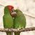 целоваться · веревку · сидят · здании · птица - Сток-фото © jirivondrous