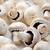 button mushrooms stock photo © jirkaejc