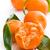 frescos · orgánico · mandarina · frutas · hojas - foto stock © jirkaejc