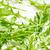 Blätter · Küchentisch · Natur · Blatt · Salat · Essen - stock foto © jirkaejc