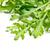 folhas · branco · natureza · folha · fundo · salada - foto stock © jirkaejc