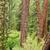 çam · ağacı · orman · zemin · kapalı · kuru - stok fotoğraf © jkraft5