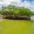 Blue · Sky · небе · лес · пейзаж · лист · деревья - Сток-фото © jkraft5