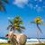 tengerpart · tehén · pálmafák · trópusi · Karib · erdő - stock fotó © jkraft5