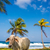 playa · vaca · palmeras · tropicales · Caribe · forestales - foto stock © jkraft5