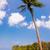 palmiye · gökyüzü · bahçeler · Sri · Lanka - stok fotoğraf © jkraft5
