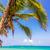palmera · Caribe · vista · azul · turquesa · mar - foto stock © jkraft5