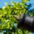 a lizard in a cannon stock photo © jkraft5