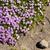 díszítő · zsálya · lila · virág · zöld · tavasz · kert - stock fotó © jkraft5