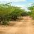 orman · zemin · doğal · manzara · güney - stok fotoğraf © jkraft5
