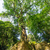 tree growing on ruins stock photo © jkraft5
