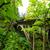 Oregon · madeira · floresta · rio · trevo · irlandês - foto stock © jkraft5