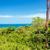 tengerpart · park · mikulás · erdő · természet · tájkép - stock fotó © jkraft5
