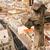 石 · クロス · コロニアル · 町 · コロンビア - ストックフォト © jkraft5