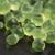 menta · kaviár · molekuláris · gasztronómia · zöld · tudomány - stock fotó © joannawnuk