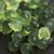menta · kaviár · molekuláris · gasztronómia · zöld · főzés - stock fotó © joannawnuk