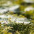web · spin · waterdruppels · wild · water · textuur - stockfoto © joannawnuk