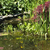 decorative pond in a garden stock photo © joannawnuk