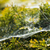 háló · pók · vízcseppek · vad · víz · textúra - stock fotó © joannawnuk