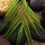 dengelemek · zen · taşlar · yeşil · ot · grup · gün · batımı - stok fotoğraf © joannawnuk