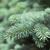 синий · природы · лес - Сток-фото © joannawnuk