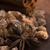 fahéj · merő · sétapálca · barnacukor · fa · háttér - stock fotó © joannawnuk