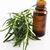 rozmaring · illóolaj · virágok · fa · természet · gyógyszer - stock fotó © joannawnuk