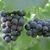 borászat · gyönyörű · sorok · szőlő · égbolt · fa - stock fotó © johnkasawa