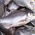 薫製 · 小 · 魚 · 食品 - ストックフォト © johnkasawa