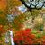 najaar · esdoorn · bladeren · water · Geel · gras - stockfoto © johnkasawa